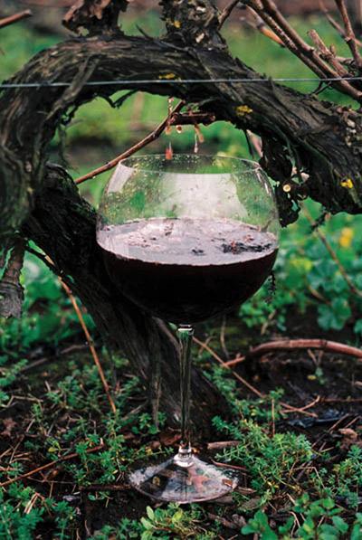 vine-drip2.jpg